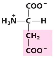 Aspartate (Asp/D)