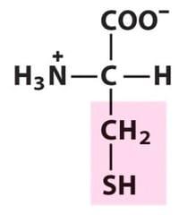 Cysteine (Cys/C)
