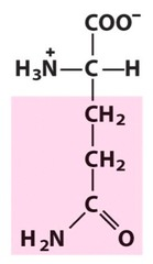 Glutamine (Gln/Q)