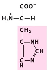 Histidine (His/H)