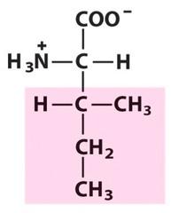 Isoleucine (Ile/I)