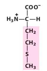 Methionine (Met/M)