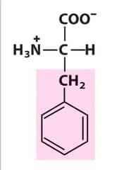 Phenylalanine (Phe/F)