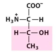 Threonine (Thr/T)