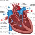 heart anatomy quiz