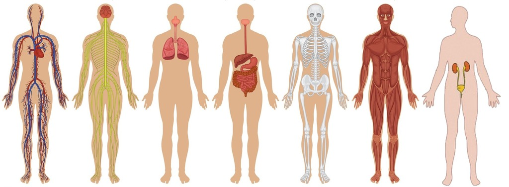 which is the most abundant biomolecule in the human body?