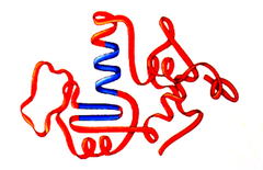 ______ structure is achieved when a protein folds into a compact, three dimensional shape stabilized by interactions between side-chain R groups of amino acids