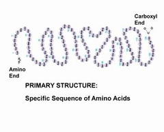 ___ structure is the sequence of amino acids in a protein
