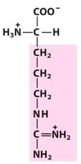 Classify these amino acids as acidic, basic, neutral polar, or neutral nonpolar.