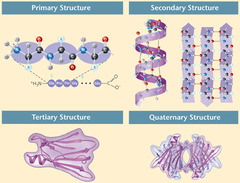 Sort the images according to the level of structure in the proteins shown.