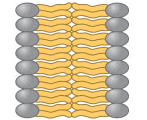 Which of these images shows the correct orientation of phospholipids in a biological membrane?