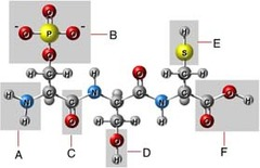 Which of these is a carbonyl group?