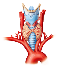 TSH secreted by the anterior pituitary (The thyroid gland is under hormonal control; thyroid-stimulating hormone secreted by the anterior pituitary stimulates secretion of thyroid hormone.)